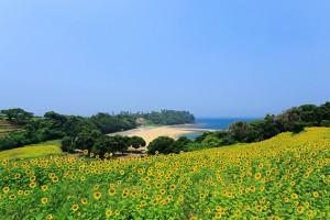 花とアートの岬づくりプロジェクト_top